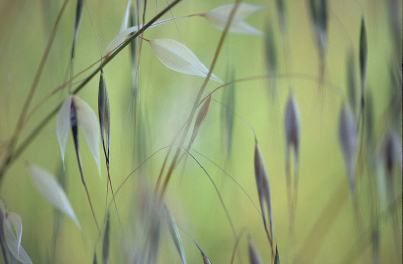 Grasses and Light