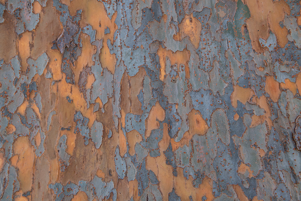 Tree Bark by Mary Macey Butler