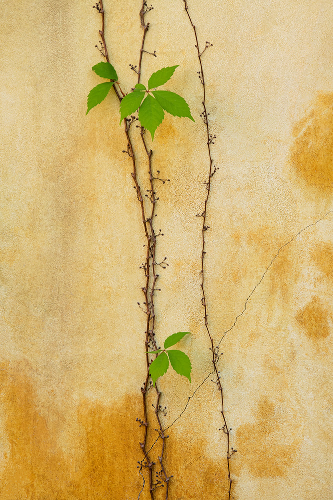 Wall Vine by Mary Macey Butler